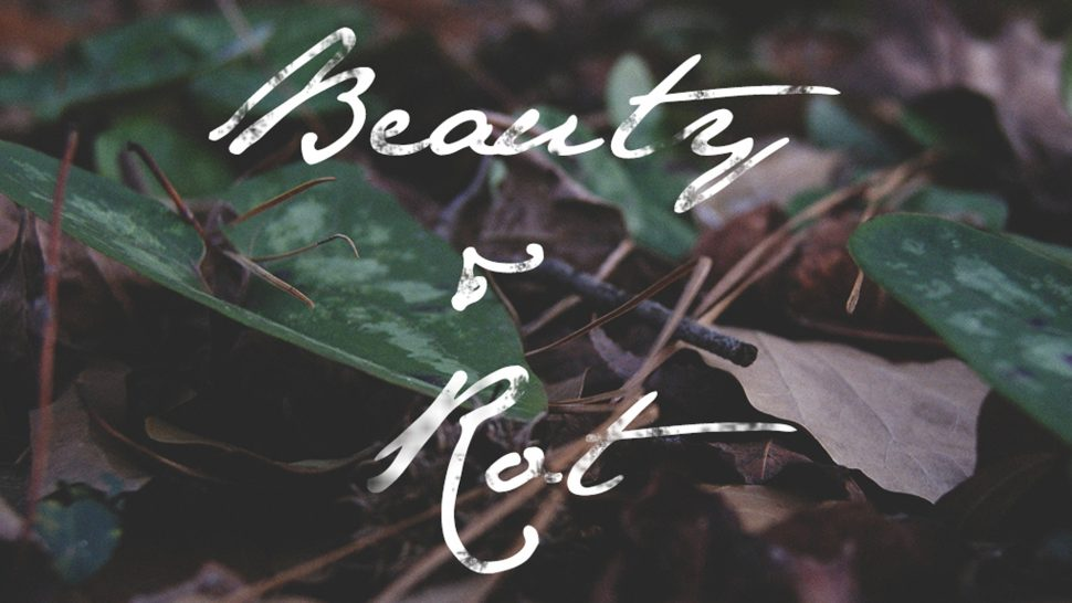 Beauty and Rot. A Poem. | Videmus Art. Syd Wachs.